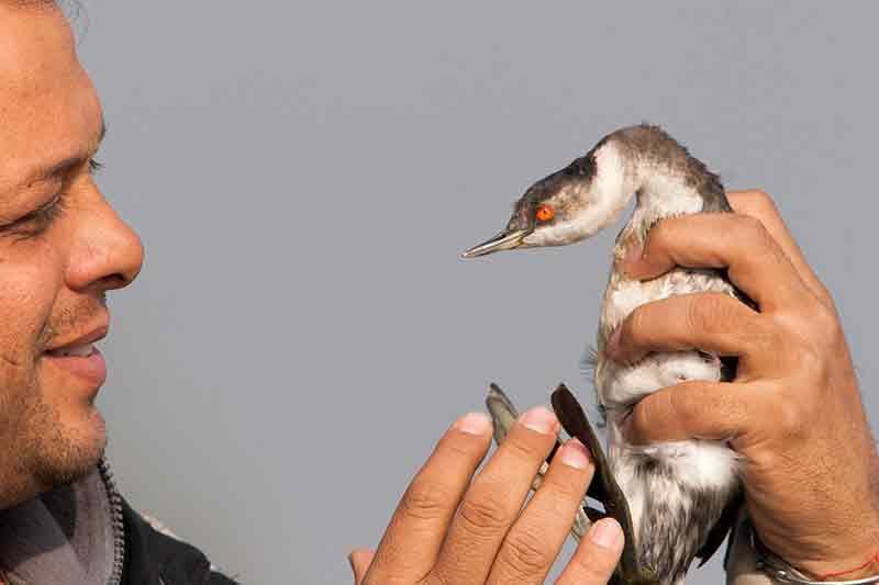Escorted Bird Tours