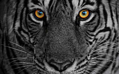 Ranthambhore Tiger Tour